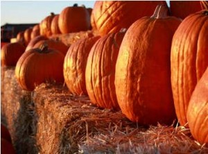 free fall and halloween festivals for kids