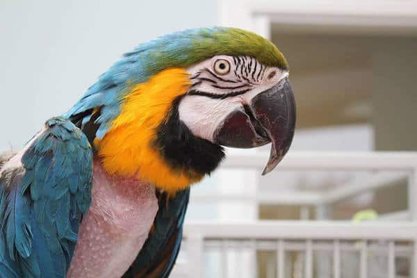 companion parrots rehomed