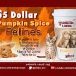 """Discounted adoption fees for """"Pumpkin Spice"""" cats"""