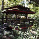 Live holiday music at UNC Charlotte Botanical Gardens