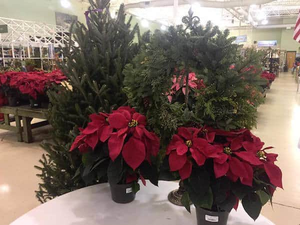Christmas Decoration Stores Charlotte Nc Home For The