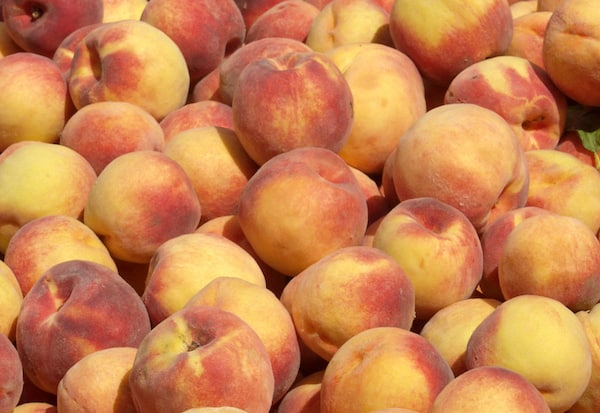 pick your own peaches charlotte