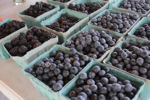 pick your own blueberries and blackberries charlotte