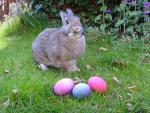 Free and cheap Easter Egg hunts in Charlotte