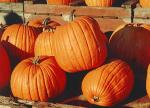 Fall Festival at Sharon Presbyterian Church
