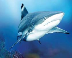 Donate blood, get free ticket to Sea Life Aquarium + VISA gift card