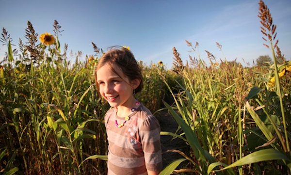 Charlotte discount corn maze