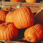 Charlotte haunted trails, pumpkin patches and hayrides