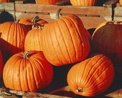 Charlotte haunted trails, pumpkin patches and hayrides 2014